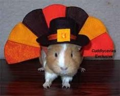 Thankful Guinea Pig (Photo via Pinterest)