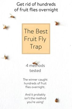 Want to get rid of fruit flies? I tested 4 popular homemade fruit fly traps. The winner caught so many more fruit flies than the others it was astonishing! fly trap THE BEST FRUIT FLY TRAP IN THE WORLD. Best Fruit Fly Trap, Fruit Fly Killer, Homemade Fruit Fly Trap, Fruit Fly Traps, What Attracts Fruit Flies, Fruit Fly Spray, Fruit Flies In House, Get Rid Of Flies, Cleaning Recipes