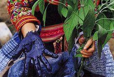 Miao people extract blue pigment from Blue Grass to dye batik, Donggoucun, Zhuchang, Longlin, Baise, Guangxi Province, China