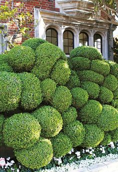 very talented gardener..