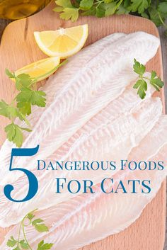 Here's a look at the five most dangerous foods for your cat, avoid them at all costs!