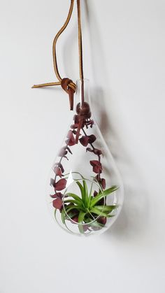 Large Teardrop Glass Terrarium with thick leather cord includes: Air plant with preserved, dark red eucalyptus leaves.  10 tall (not including