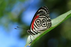 Butterfly close-up taken with Canon EOS 70D DSLR camera best price in Australia https://www.camerasdirect.com.au/digital-cameras/digital-slr-cameras/canon-dslr-cameras