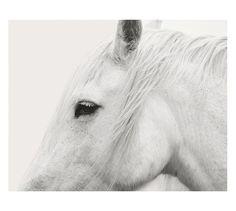 White Horse Framed Print by Jennifer Meyers, Pottery Barn