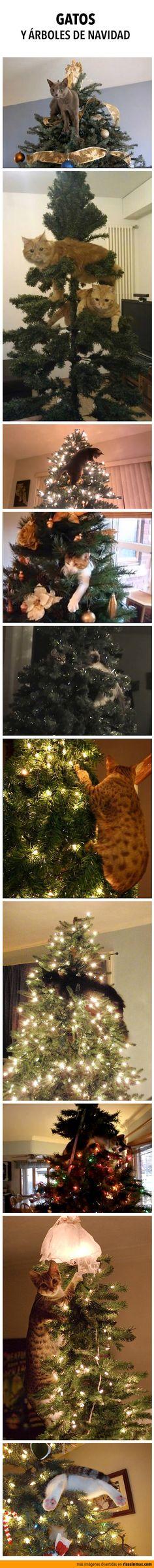 Gatos y árboles de navidad. Buenos amigos.