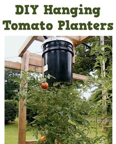 DIY Hanging Tomato Planters!  {simple gardening trick to grow fabulous tomatoes!} #tomatoes #gardening