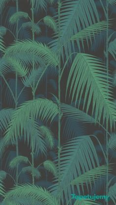 Tapeta Cole & Son - Contemporary Restyled - Palm Jungle - 95 1003 - Contemporary Restyled - Cole & Son - Tapety dekoracyjne