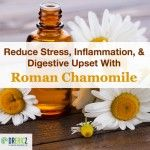 Roman Chamomile To Reduce Stress, Inflammation, and Digestive Upset
