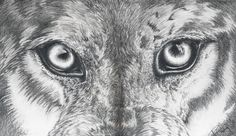 wolf sketch - Google Search