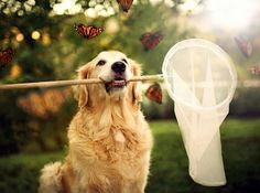.Garota fotografa seu cão diariamente e capta nas fotos a essência  dos cães