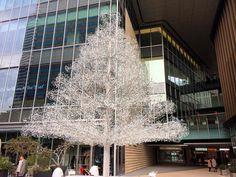 赤坂プリンス跡地は東京ガーデンテラスという複合ビルとなったがそのエントランスにとても気になるツリーがある高速道路から見るととてつもなくキラキラ輝いているので確かめたらガラス製箱根ガラスの森美術館との連携作品らしい#glasstree #gardenterrace #kioicho #tokyo