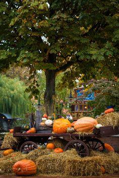 Halloween. by Tetyana Moshchenko on 500px