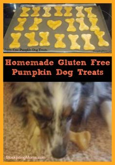 Gluten Free Pumpkin Dog Treats | #homemade #DIY #pet