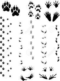 paw prints and tracks. bottom row: opossum frog vectors are all clean objects easy to color or add background. all non-black areas are transparent in vector file Deer Tracks, Animal Tracks, Raccoon Paws, Print Pictures, Animal Pictures, Deer Vector, Vector File, Coloring Books, Coloring Pages