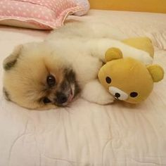 Totally adorable