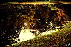 #orońsko #crp #staw #drzewa #fotografia