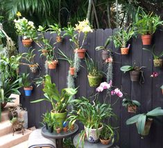 Privacy fence decorated with orchids in clay and decorative pots secured with Hangapot, the hidden flower pot hanger.