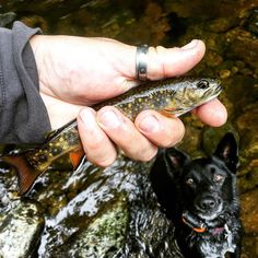 Since the world seems to care less and less about wild and natural things - I may as well start feeding these little gems to lady wide eyes here :) #fishingdog#wildfishingadventure #fishing #flyfishingjunkie #dogsonadventures