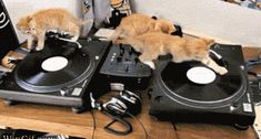 25 Funny & Cute Cat GIFs