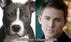 5 dog breeds that look like celebrities - Punchline on CBC