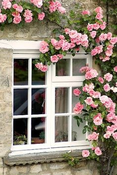Climbing roses -- for how pretty they look and the frangrance they bring through. - Climbing roses — for how pretty they look and the frangrance they bring through an open window - Rare Flowers, Pretty Flowers, Beautiful Roses, Beautiful Gardens, Diy Garden, Fruit Garden, Summer Garden, Climbing Roses, Rose Cottage