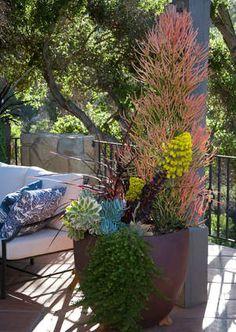 Succulent Container Container Gardens Grace Design Associates Santa Barbara, CA Growing Succulents, Succulents In Containers, Container Plants, Cacti And Succulents, Planting Succulents, Container Gardening, Succulent Planters, Santa Barbara, Drought Tolerant Garden