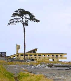 Of the 70,000 trees that once lined the shore of Rikuzentakata, Japan, only one remained after the 2011 tsunami.Unfortunately, although the nearly 90-foot-tall, 200-year-old tree lived through the floods, it couldn't survive the resulting saline content in its earth, and 18 months later it died. However, a sculpture erected in 2013 returned the tree permanently to the shore, with its trunk coated and formed over a metal mold and its leaves and branches synthetically remade.