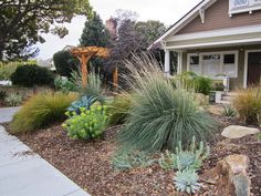 Informal garden with succulents and grasses - xeriscaping