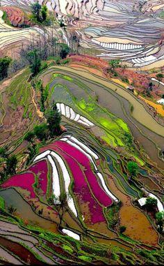 Hani Terraces - China