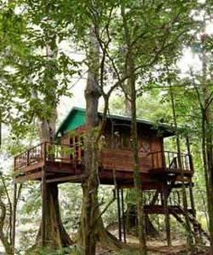 Our Jungle House Tree House Bungalows Resort Khao Sok National Park Thailand: