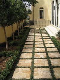 Paver Walkway with sage between pavers... The page is gone but the picture will do for recreating this path.