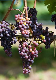 Wine making class and tasting