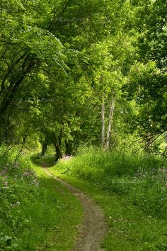 Perfect walking trail