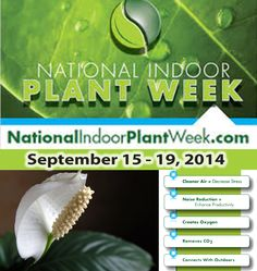 Houseplants bring MANY benefits to indoor environments! #NationalIndoorPlantWeek #NIPW http://www.nationalindoorplantweek.com