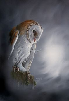 Stormfront: A wise owl always knows how to rebuild himself, Even better than that, he knows how to rebuild others without speaking a word. The power of the mind. Owl Photos, Owl Pictures, Owl Bird, Bird Art, Pet Birds, Fly Drawing, Owl Wings, Owl Artwork, Owl Wallpaper
