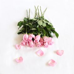 Pink roses ♡ The Land of Lavish Instagram