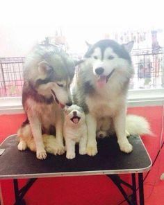 A cute family