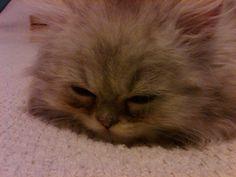 Baby dusty sleeping