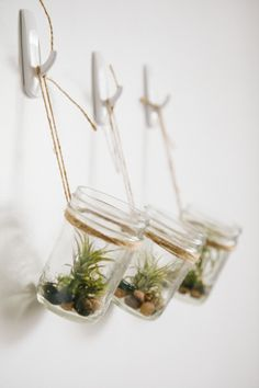 DIY Hanging Mason Jar Planter with Air Plants - This looks easy to do AND it requires no fancy wall treatments! Hanging Air Plants, Diy Hanging Planter, Hanging Mason Jars, Indoor Plants, Hanging Terrarium, Indoor Herbs, Hanging Gardens, Indoor Gardening, Cactus E Suculentas