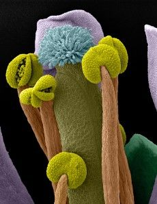 An image of an Arabidopsis thaliana flower, commonly known as thale cress. See 18 Mind-Blowing Images From The World Of Science Macro Fotografie, Fotografia Macro, Science Art, Science And Nature, Science Images, Weird Science, Photo Macro, Mind Blowing Images, Scanning Electron Microscope