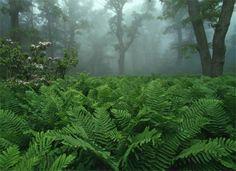 Google Image Result for http://nationalparkguidebook.com/files/2010/12/shenandoah-national-park-3.jpg