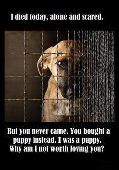 ** Older cats & dogs need consideration for adopting.