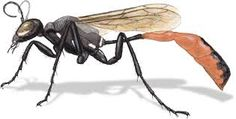 How to Draw Insects: Understanding and Drawing the Legs (part - John Muir Laws How To Draw Insects, Insect Legs, Animal Drawings, Art Drawings, Insect Anatomy, Drawing Legs, Leg Anatomy, Insect Photos, Insect Art