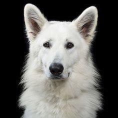 """« Faces », les portraits d'animaux de Rob Bahou - """"The White Wizard"""" - Photo : Rob Bahou"""
