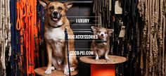 Luxury Dog Accessories - Modern and stylish products – from beds to bowls and collars to carriers for your dog - COCO-PEI.COM™