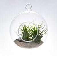 Hanging Terrarium, Terrarium Plants, Air Plants, Candles, Simple, Glass, Romania, Design, Gardening