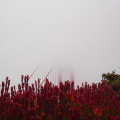 #10yearsoftravel I really thought the fog wouldn't clear here it did but somehow this makes for a special pic  ____________________________________________________  #dh #goldengatebridge #red #fog #foggy #travel #travelling #picoftheday