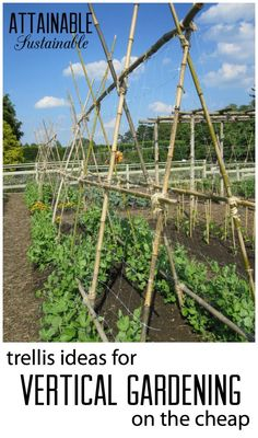 Growing vertically is a great way to make the most of a small garden space. Learn to build inexpensive trellises from some creative materials. Garden ~ prepping ~ homestead ~ grow your own ~ seeds ~ vegetables