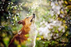 Mity i magia w psiej historii