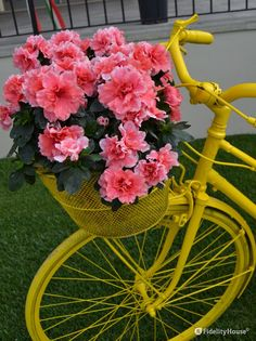 Le azalee rosa sul cestino della bicicletta colorata di giallo danno un tono di dolcezza alla vivacità del giallo.